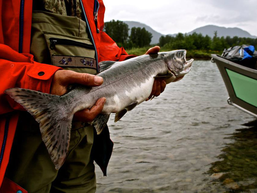 fly fishing guide jobs bc